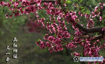 花红柳绿又一春