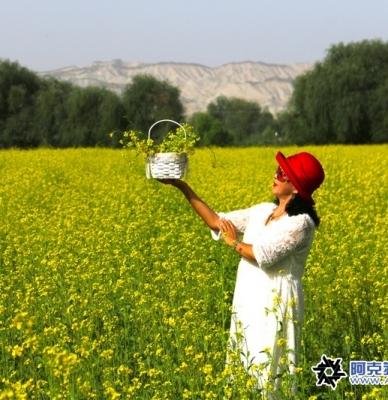 manbetx官方网站市依干其乡五大队赏油菜花美景