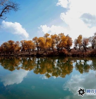 最美丽的秋色最美丽的树